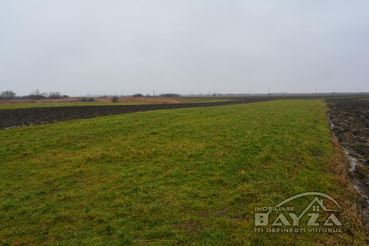 Pret: 750 EURO, Vanzare teren, zona Mogosesti